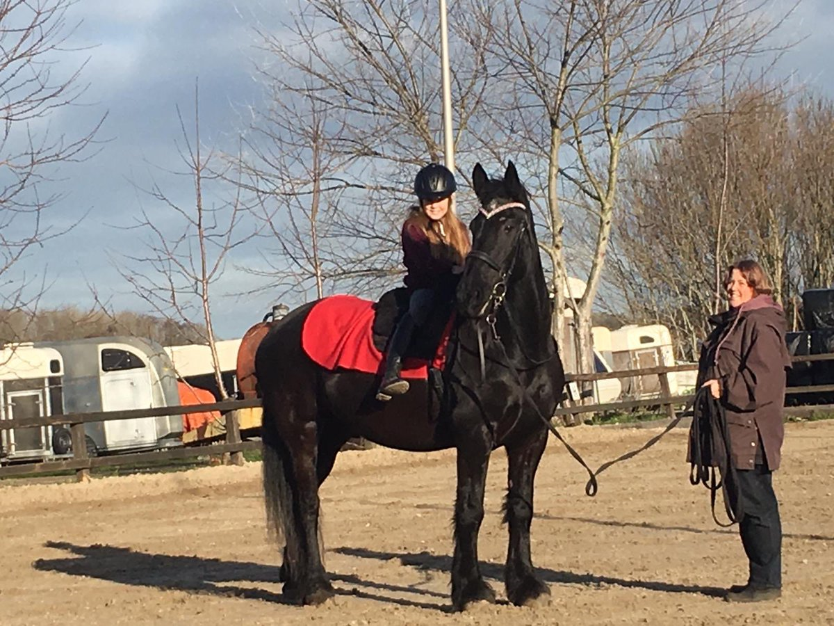 Jippe Equine Therapie
